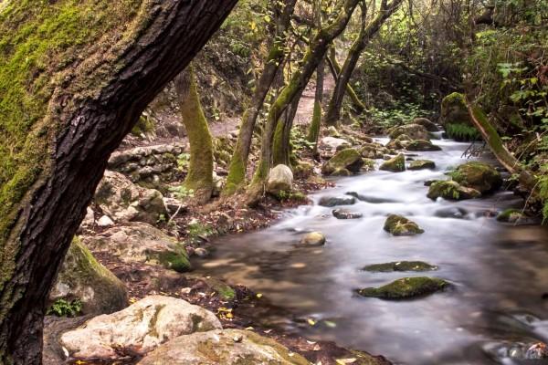 Cádiz el Bosque