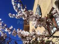 Foto 1 de Hotel Miralles