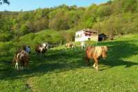 Foto 1 de Casa Rural Bagoleko Borda 1
