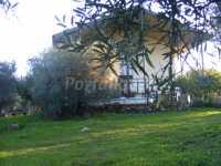 porche con piscina en olivar