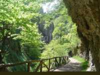 Foto 4 de El Bosque Encantado