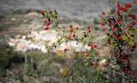 Foto 7 de Casa Rural La Casota
