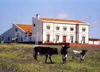 Foto 1 de Finca Los Llanos