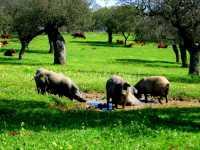 Foto 4 de Finca Los Llanos