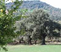 Foto 11 de Casa Azahar. El Bosque
