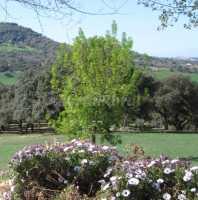 Foto 9 de Casa Azahar. El Bosque