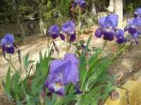 Foto 1 de Casa Rural La Risca 1
