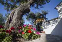 Foto 3 de Casa Rural Los Fresnos