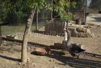 Foto 5 de Casa Rural Mas Ramades