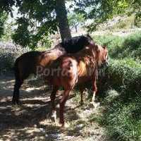 Foto 10 de Casa Rural Miravella
