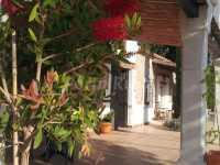 Foto 3 de Cortijo Anchurones De San Pedro