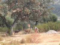 Foto 4 de Casa Rural Sierra Norte