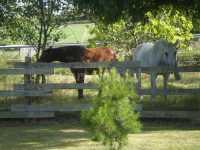 finca con caballos