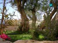 Foto 5 de Casa Rural La Gesta