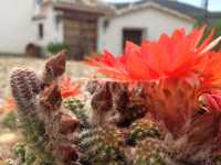 Foto 9 de Cortijo Rural Majolero