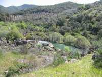 Foto 4 de Bungalows Camping Puente Nuevo