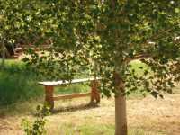 Foto 6 de Masía Rural Molí Del Pont