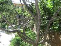 Foto 2 de Barrio De Arriba