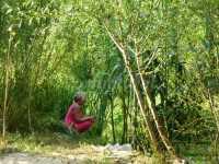 a lado del rio..observacion del aves y tortugas